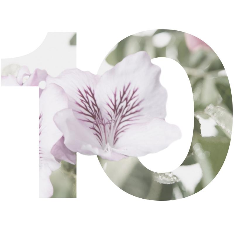 10 Rose Geranium