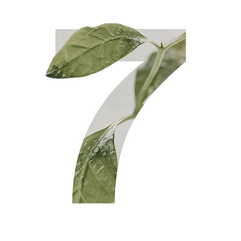 7 Ylang Ylang