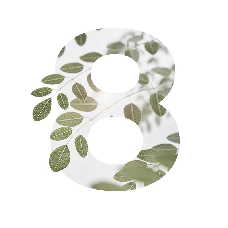 8 Moringa Tree